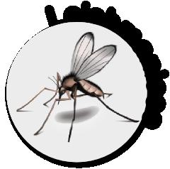 Larva migrans cutánea (erupción serpiginosa) - Dermas ...