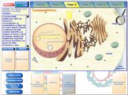 sintetizando-proteinas690x518