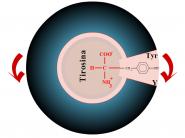 disco-de-aminoacidos690x518