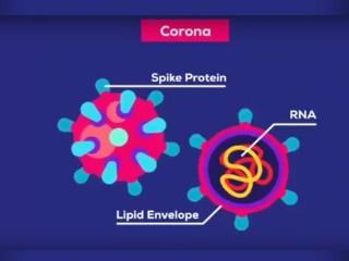 Explicando o Coronavírus & O Que Você Deveria Fazer