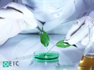 ¿Hablemos de Biotecnología?
