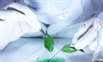 Vamos falar sobre Biotecnologia?
